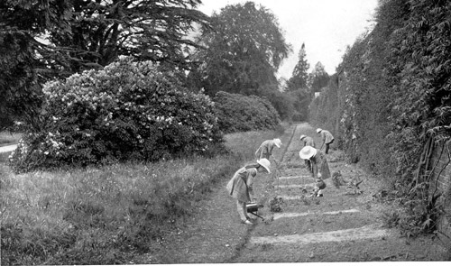 The Westlands School -